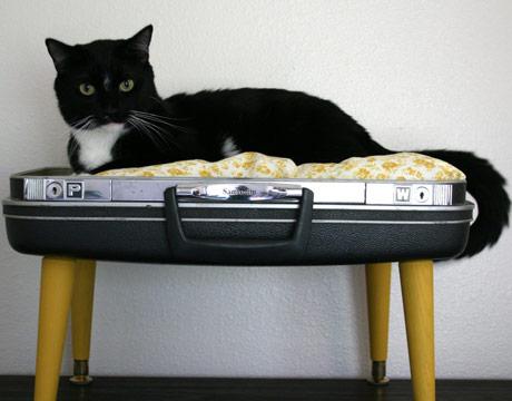 Koffer als Haustierbett