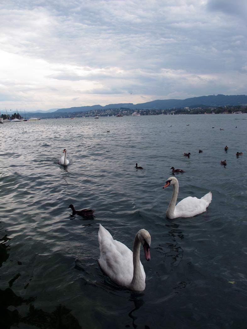 Zürisee. Zürichsee.