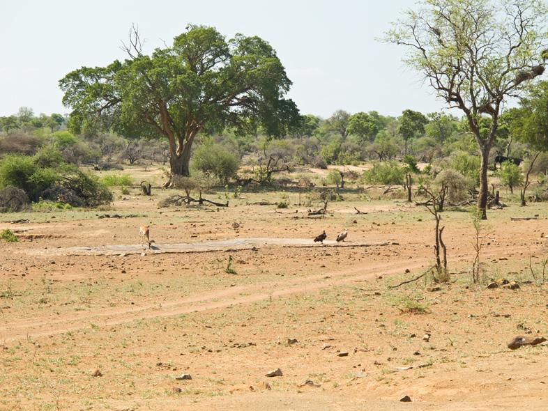geier-und-impala