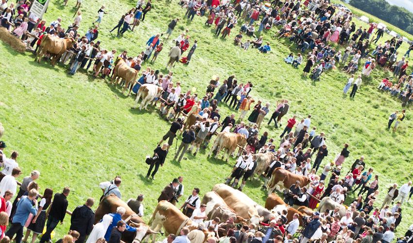 Ochsenrennen Münsing 2012