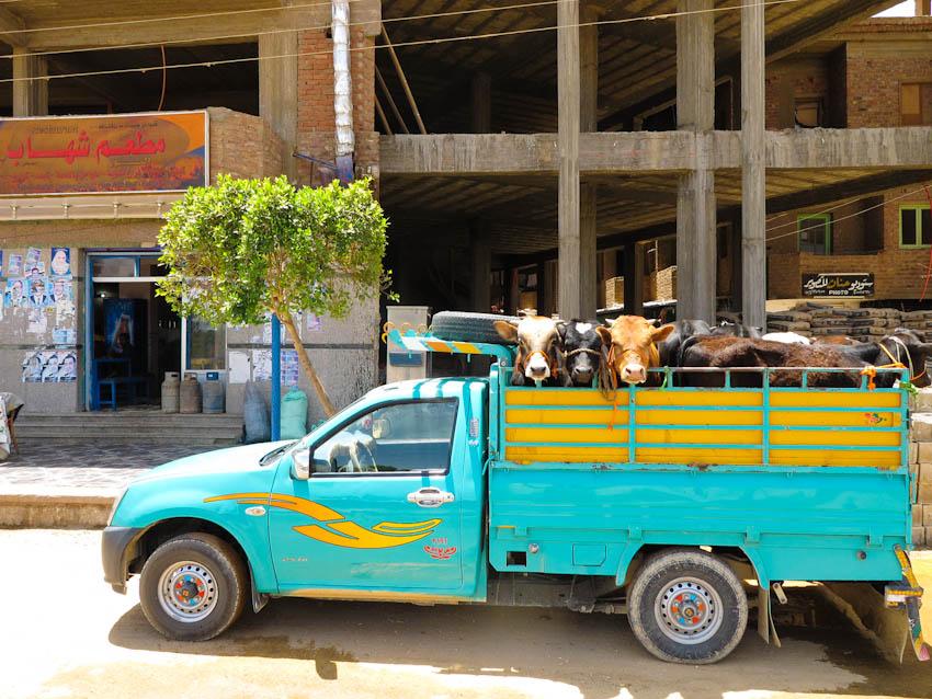 Ägypten Oase Dakhla