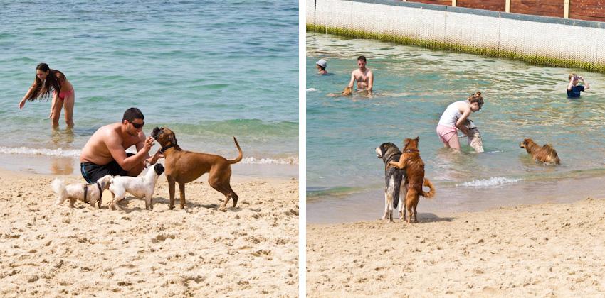 Tel-Aviv-Hunde-am-Strand