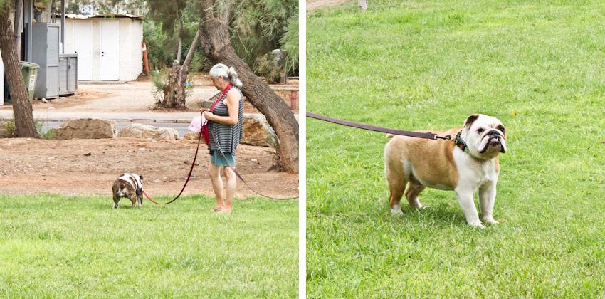 Tel-Aviv-Hunde-im-park