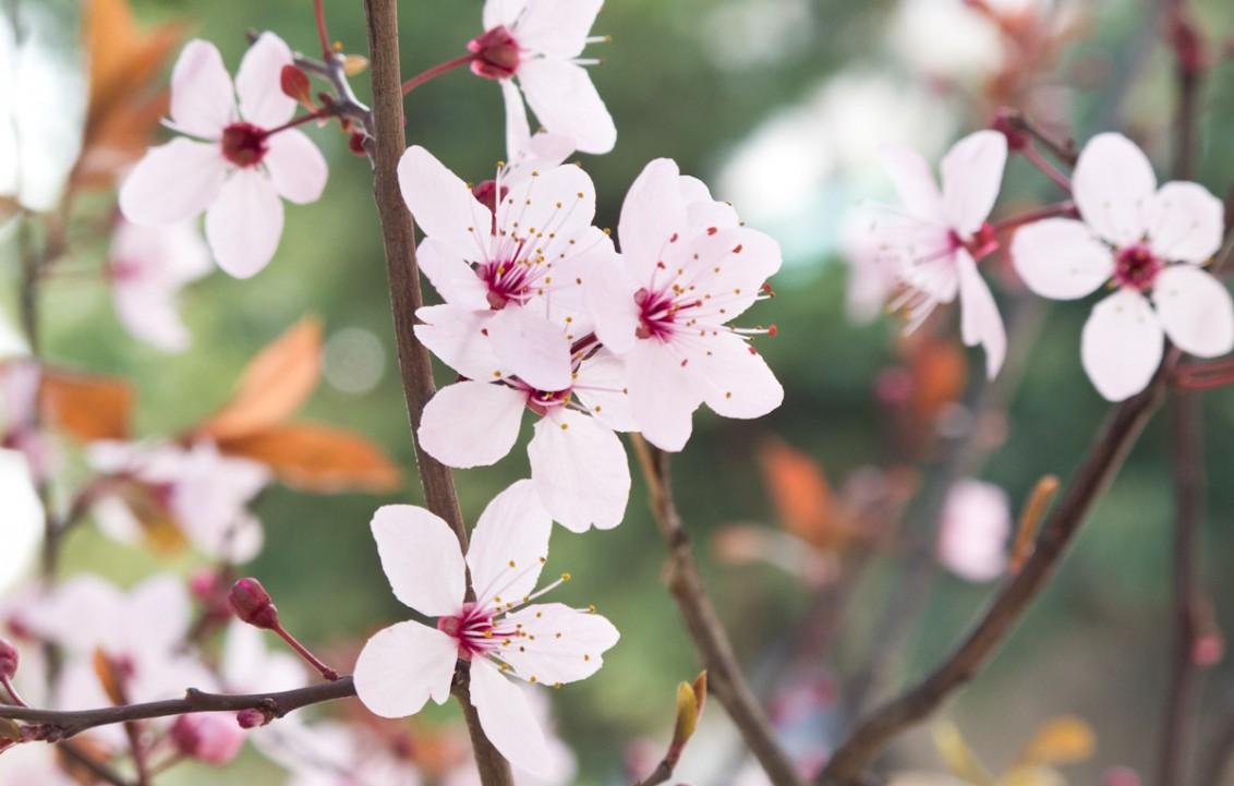 Frühling_Blüten