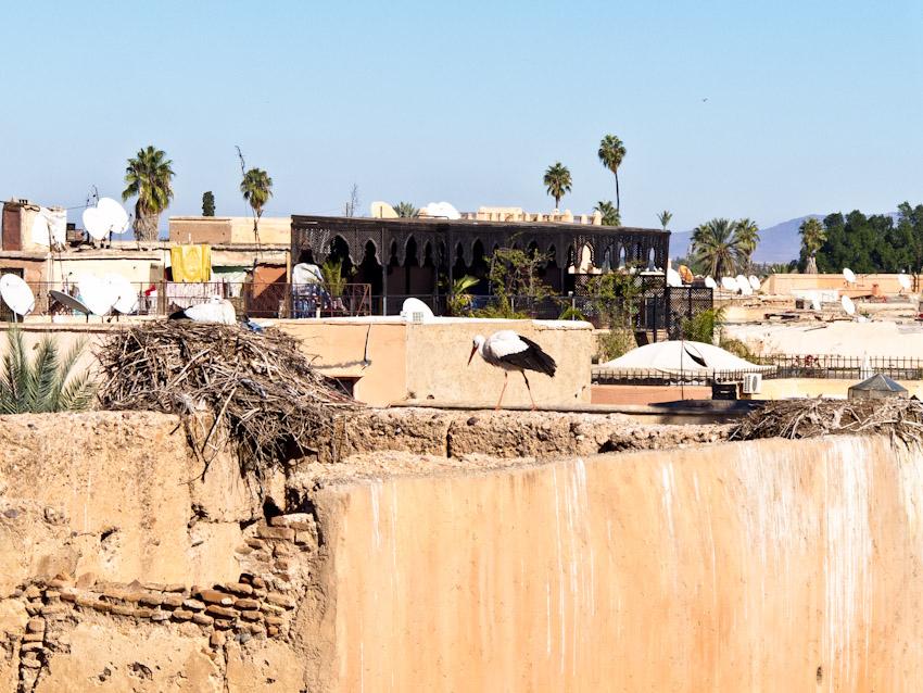Marrakesch Storch auf der Altstadt Mauer