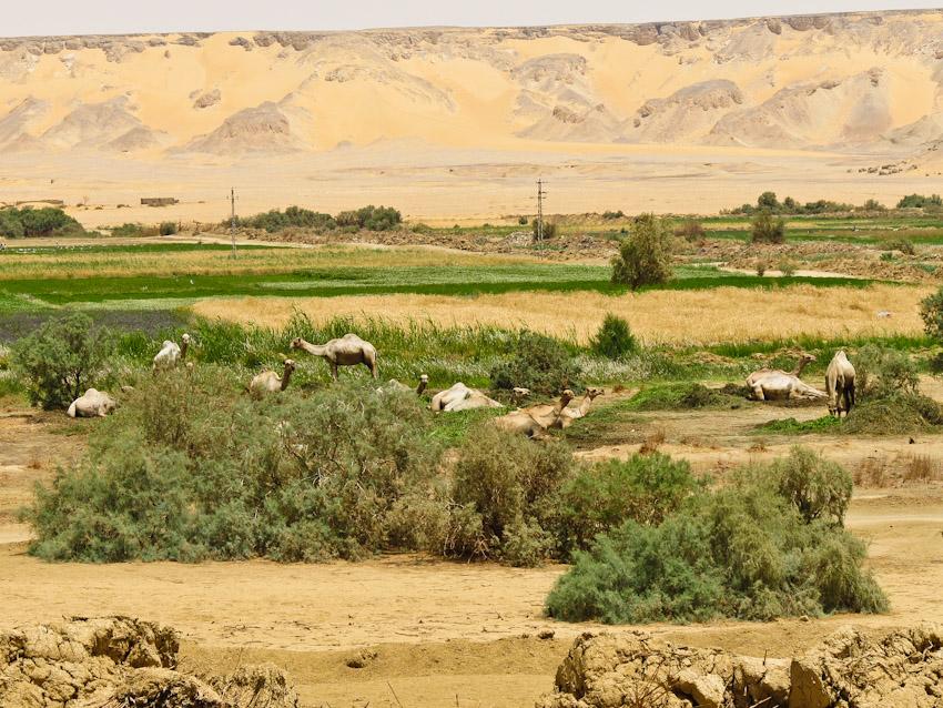 Ägypten Wüste libysche