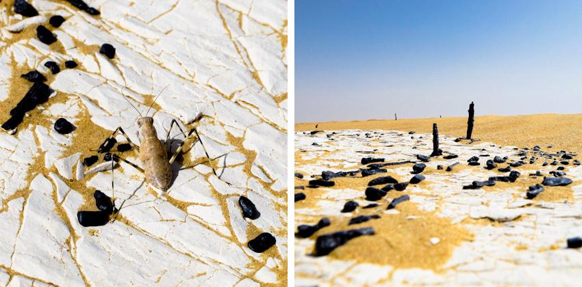 Wueste-Insekt-aegypten