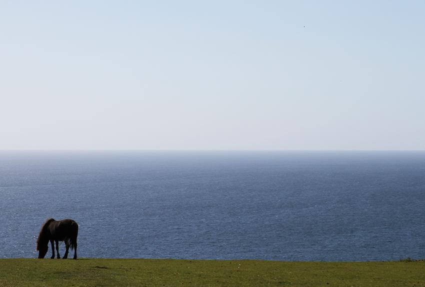 Pferd-in-Rame-Head