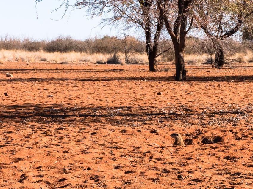 Kalahari Bushland Namibia