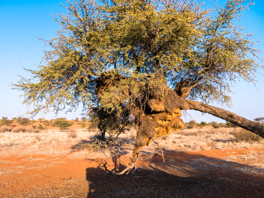 Kalahari Namibia