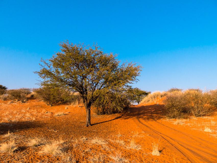 Kalahari Namibia-1070958