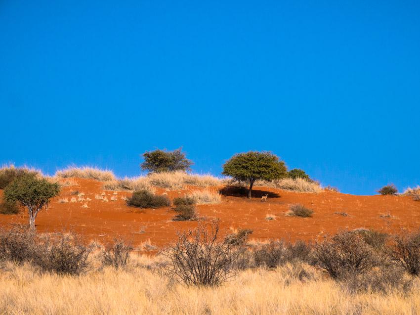 Kalahari Namibia-1070978
