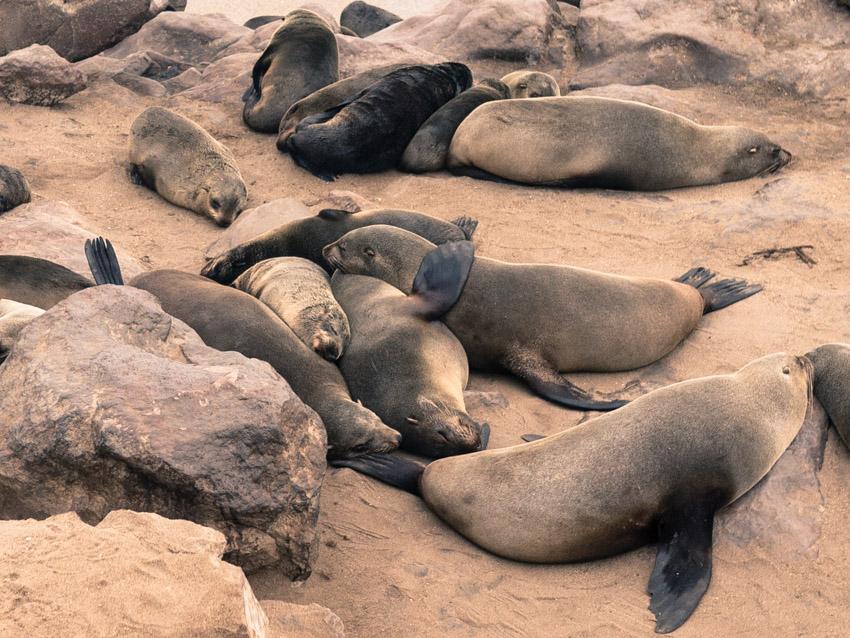 Namibia Atlantikküste Robben-1090349