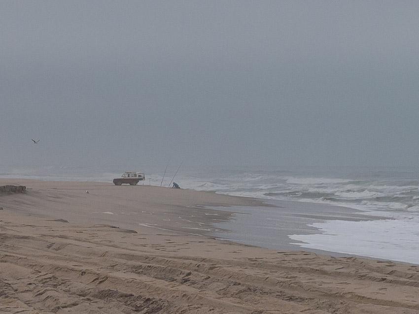 Namibia Atlantikküste Robben-1090284