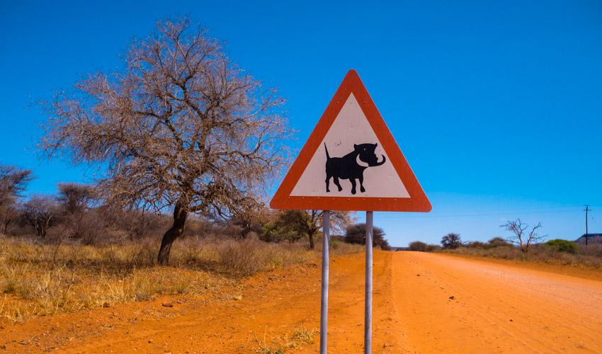 Warzenschwein Strassenschild Namibia