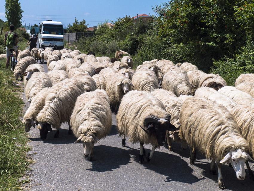 Albanien Skodra-15