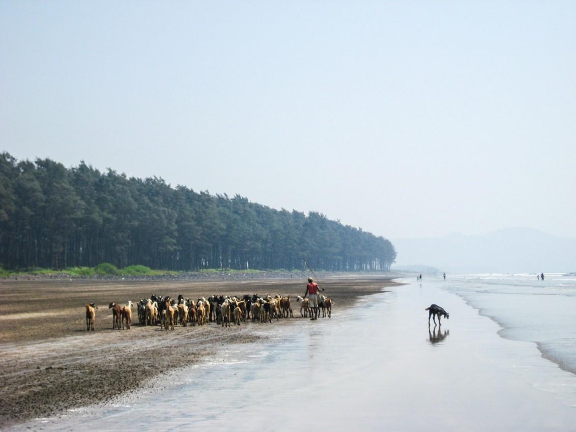 Alibag Indien-3066