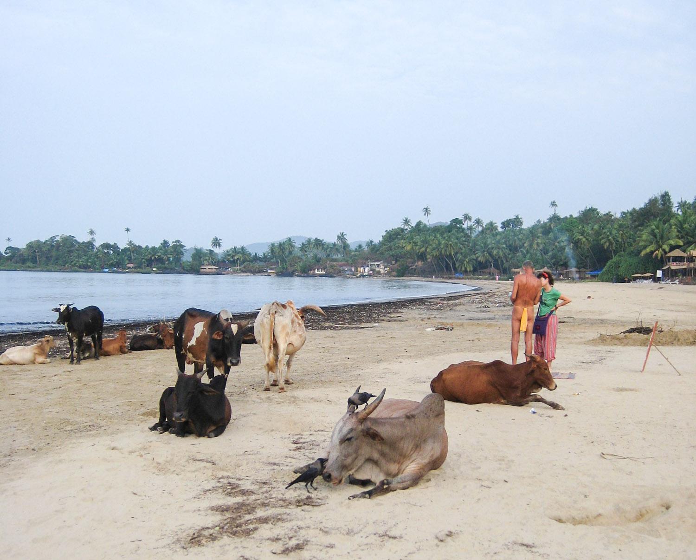 Goa Indien Patnem Palolem-3399