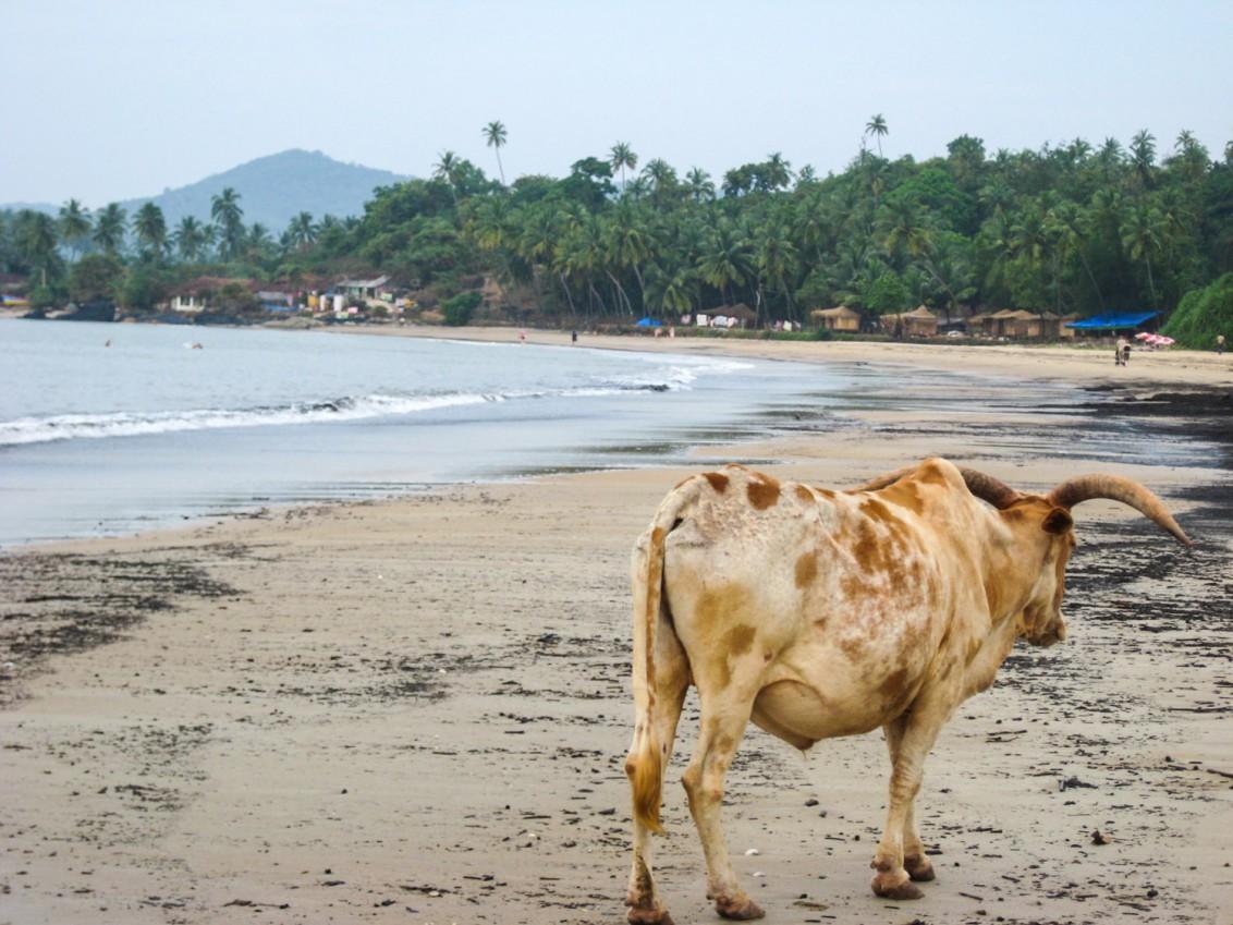 Goa Indien Patnem Palolem-3411
