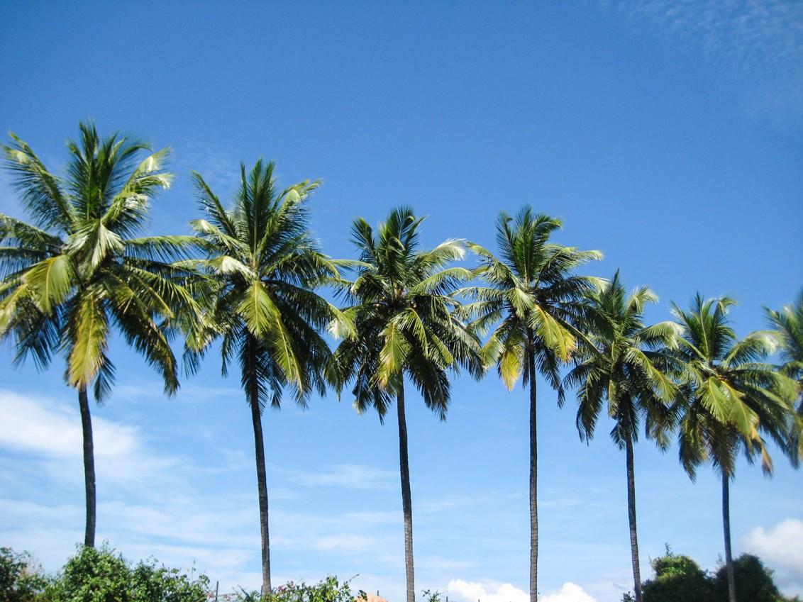 Goa Indien Patnem Palolem-3498
