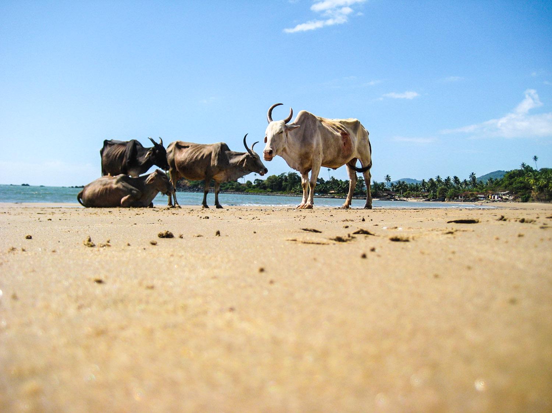 Goa Indien Patnem Palolem-3573
