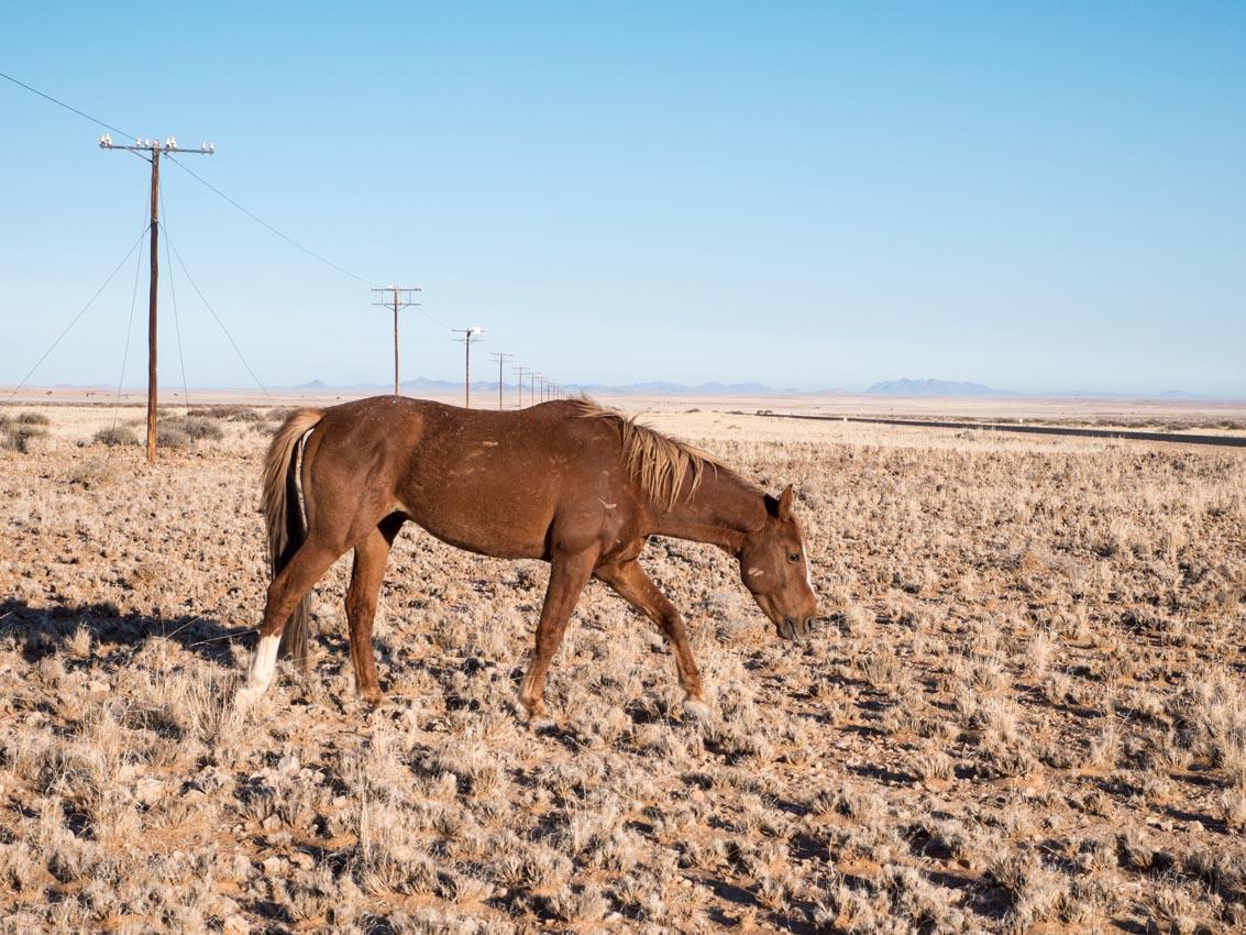 Wüstenpferd von Garub in der Namibwüste