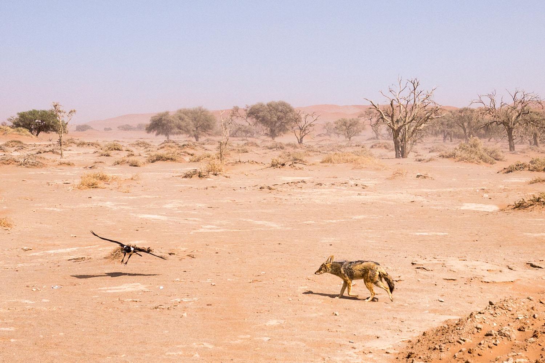 Namibia-1090011