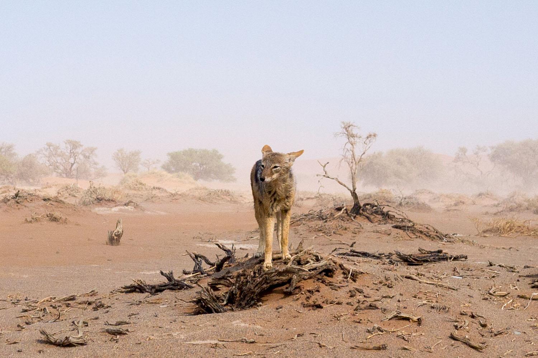 Namibia-1090019