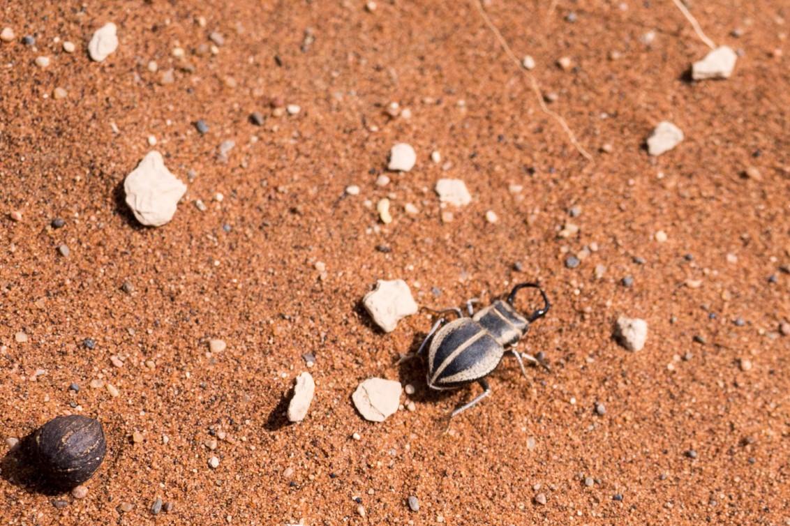 Namibia-1090052