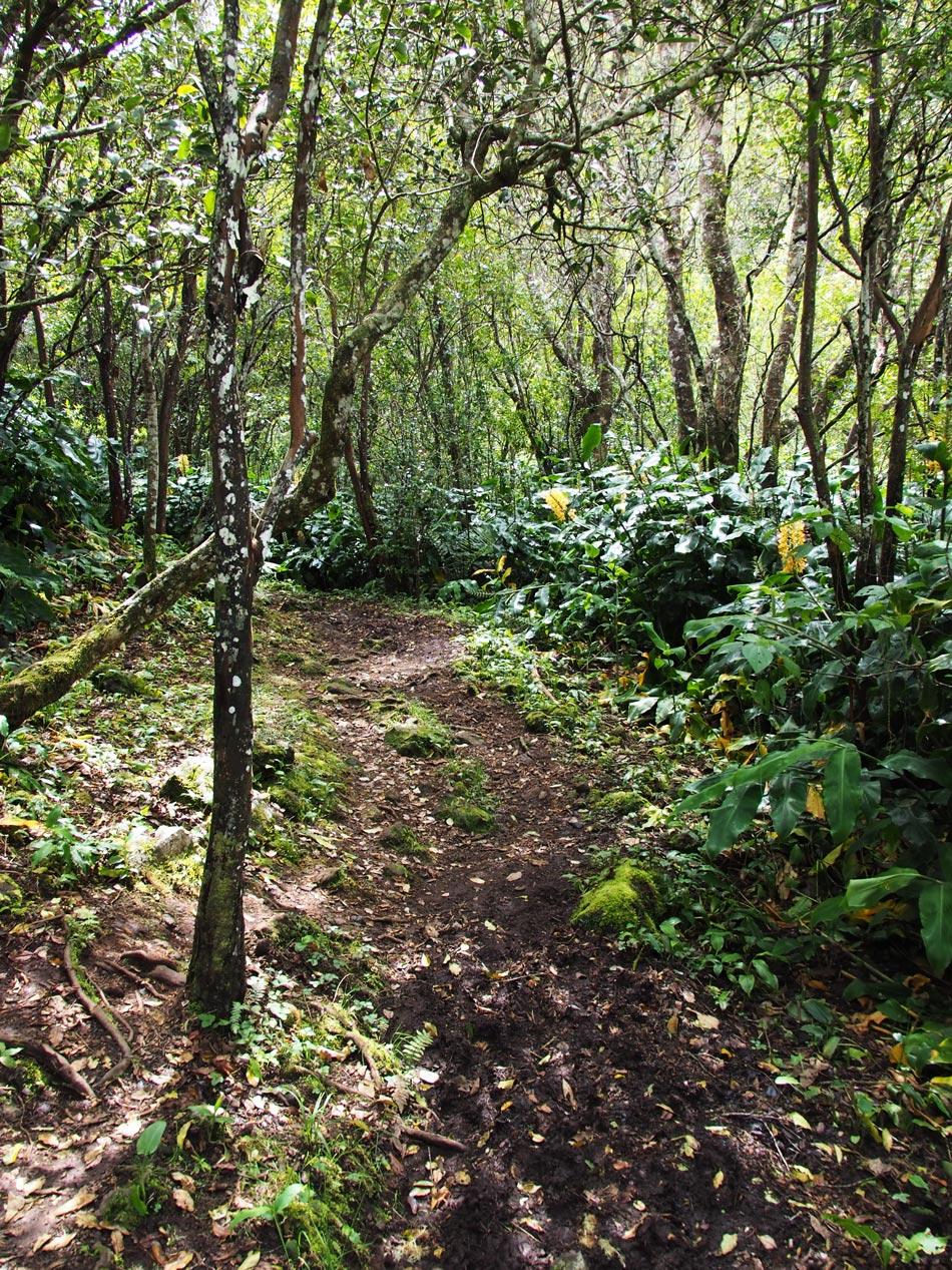 Wald-Berge-Reunion
