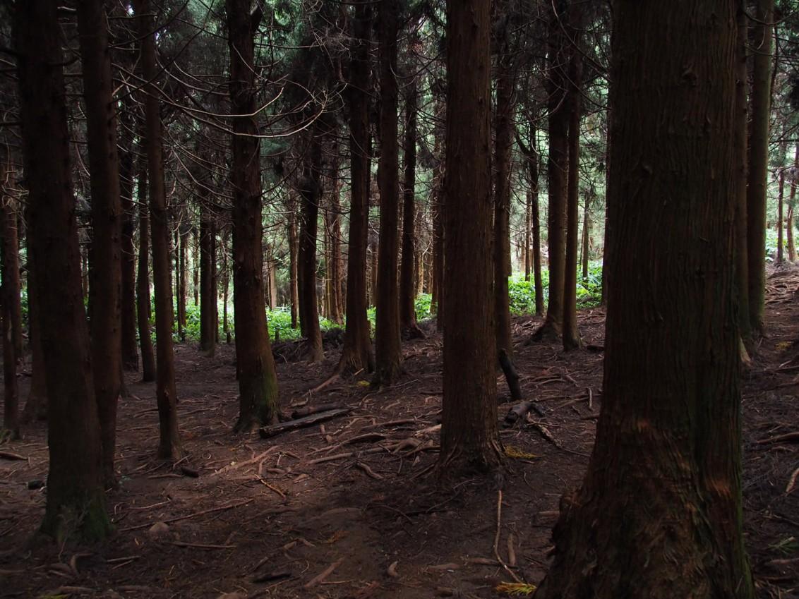 Wald-La-Reunion