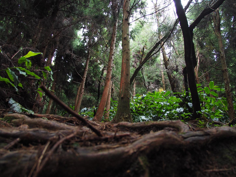 Wald-Reunion