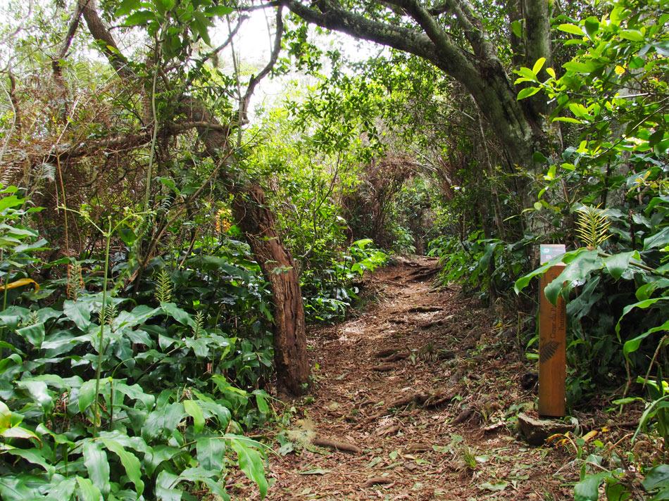 Wanderweg-La-Reunion