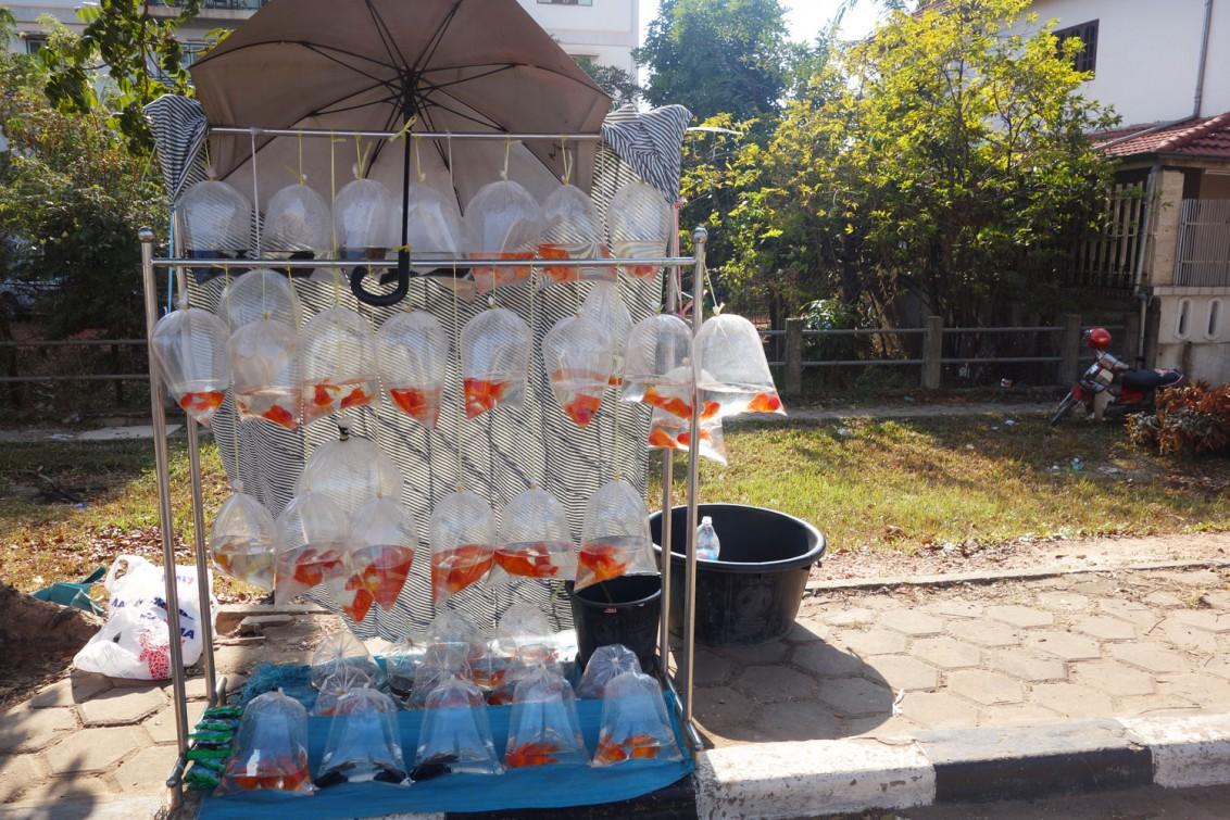 Fische-Vientiane
