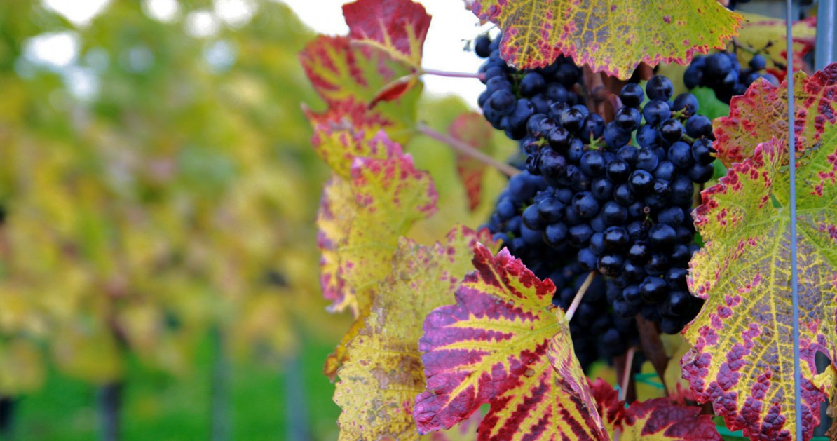 Herbst in Hagnau